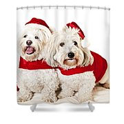 Two Cute Dogs In Santa Outfits Shower Curtain