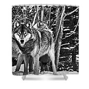 Two Gray Wolves Shower Curtain