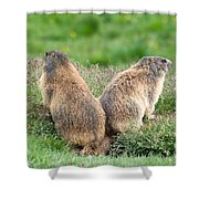 Two Marmots Shower Curtain
