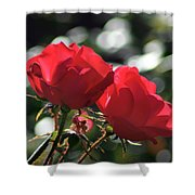 Two Red Roses Shower Curtain