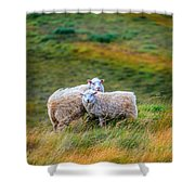 Two Sheep Shower Curtain