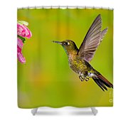 Tyrian Metaltail Hummingbird Shower Curtain