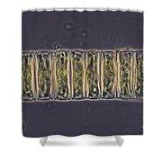 Ulothrix Sp. Algae, Lm Shower Curtain