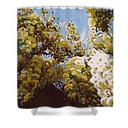 Up Into Wisteria Shower Curtain