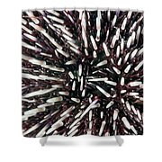 Urchin Spines Shower Curtain