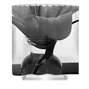 1 V Lily In Vase Bw Shower Curtain