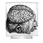 Vesalius: Brain, 1543 Shower Curtain