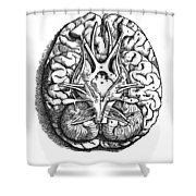 Vesalius: Brain Shower Curtain