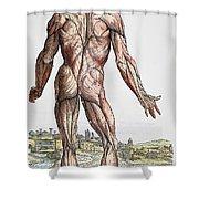 Vesalius: Muscles, 1543 Shower Curtain