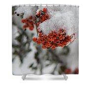 Viburnum Shrub In Snow Shower Curtain