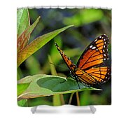 Viceroy 2 Shower Curtain