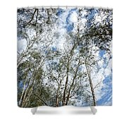 View Of Towering Trees Shower Curtain