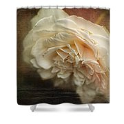 Vintage Tea Rose Shower Curtain