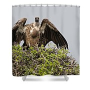 Vultures With Full Crops Shower Curtain