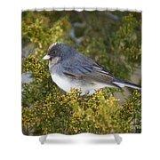 Waiting Out Winter Shower Curtain