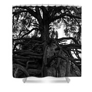 Walking Oak Shower Curtain