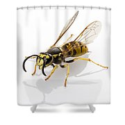 Wasp Isolated  Shower Curtain