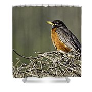 Watchful Eye Shower Curtain