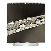 Water Drops On Grass Blade Shower Curtain