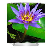 Water Lily 20 Shower Curtain