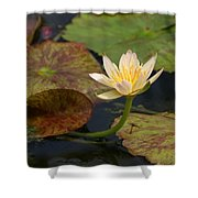 Water Lily 25 Shower Curtain