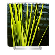 Water Reeds Shower Curtain