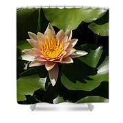Exotic Colors - A Soft Coral Waterlily Shower Curtain