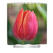 Watermelon Tulip Shower Curtain