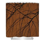 Weeping Birches Shower Curtain