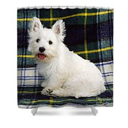 West Highland White Terrier Puppy Shower Curtain