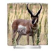 Where The Antelope Play Shower Curtain