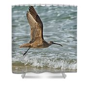 Whimbrel In Flight Shower Curtain