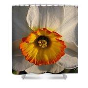 Paper White Daffodil Shower Curtain
