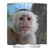 White Face Monkey  Shower Curtain