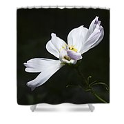 White Flower In Bloom Shower Curtain