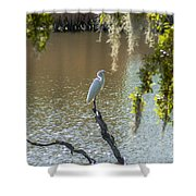 White Heron In Magnolia Cemetery Shower Curtain