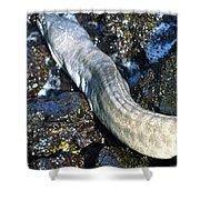 White Moray Eel Shower Curtain