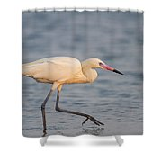 White Morph Redish Egret Shower Curtain
