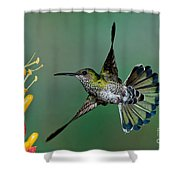 White-necked Jacobin Shower Curtain