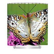 White Peacock Butterfly Anartia Shower Curtain