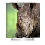 White Rhinoceros Shower Curtain by Johan Swanepoel
