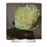 White Rose With Old Paper Texture Shower Curtain