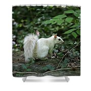 White Squirrel Shower Curtain