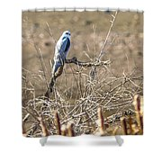 White Tailed Kite Shower Curtain