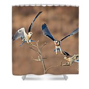 White-tailed Kite Siblings Shower Curtain