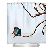 White-throated Kingfisher Shower Curtain