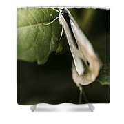 White Winged Moth Insect On A Green Tree Leaf Shower Curtain