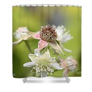 Wild Black Raspberry Blossom Shower Curtain