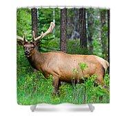 Wild Bull Elk Shower Curtain