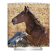 Wild Horse Foal Shower Curtain